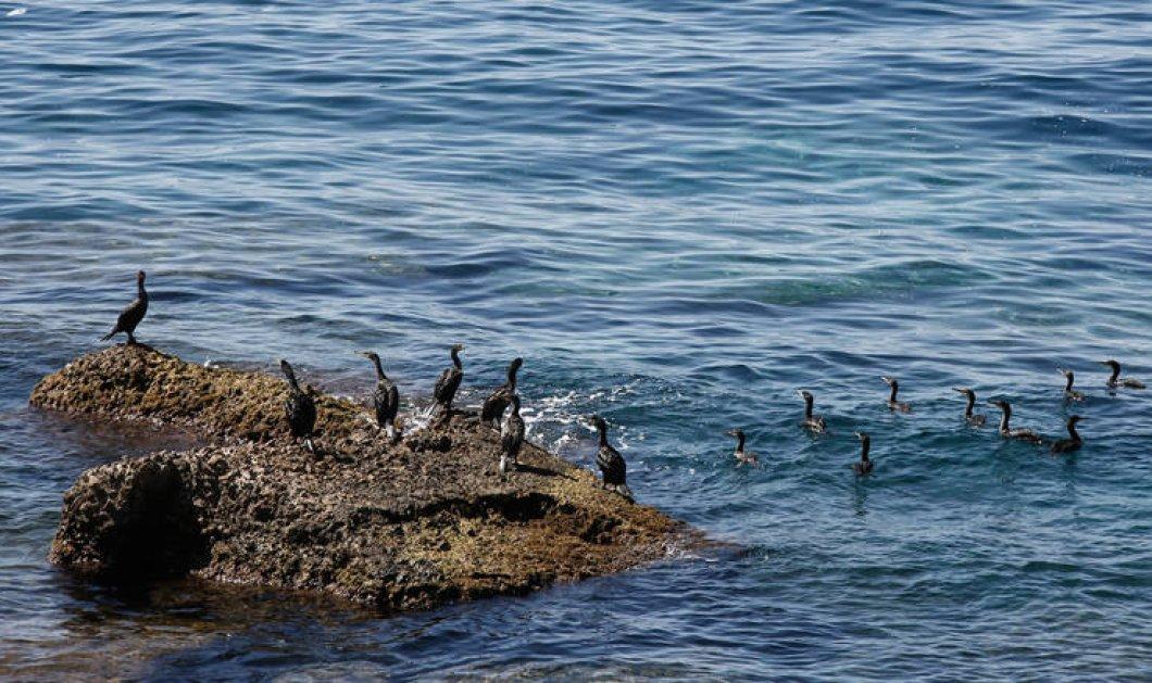 Εμμ. Δούση ( καθηγήτρια ΕΚΠΑ): Η Ελλάδα επηρεάζεται πολύ περισσότερο από όσο της αναλογεί από την κλιματική αλλαγή - Κυρίως Φωτογραφία - Gallery - Video