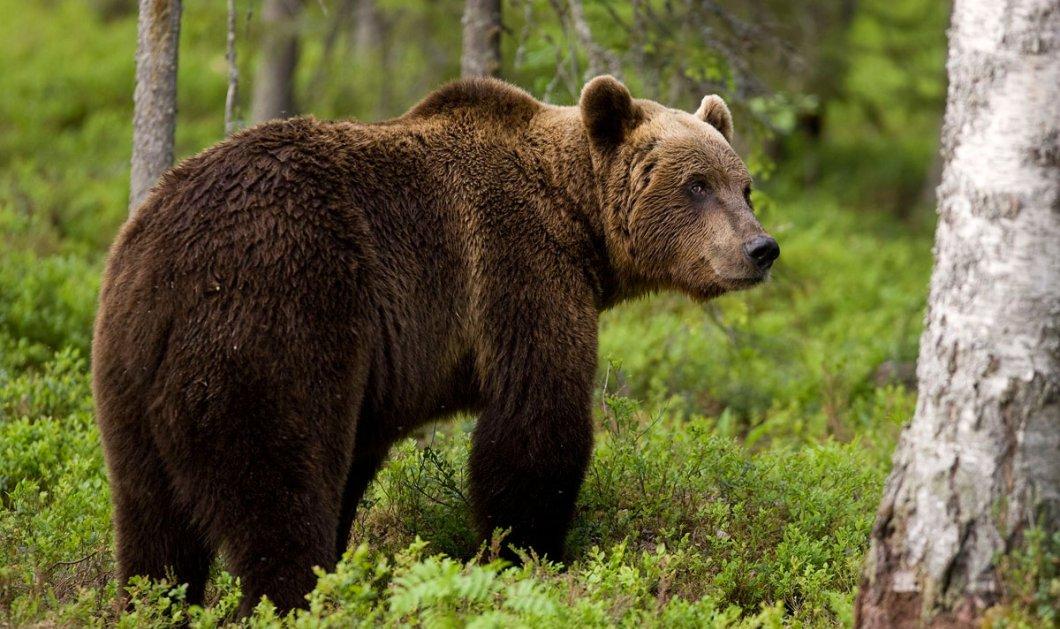 Top Woman η γυναίκα-βοσκός στα Τρίκαλα: Επέζησε από επίθεση αρκούδας με πέτρες - Κυρίως Φωτογραφία - Gallery - Video
