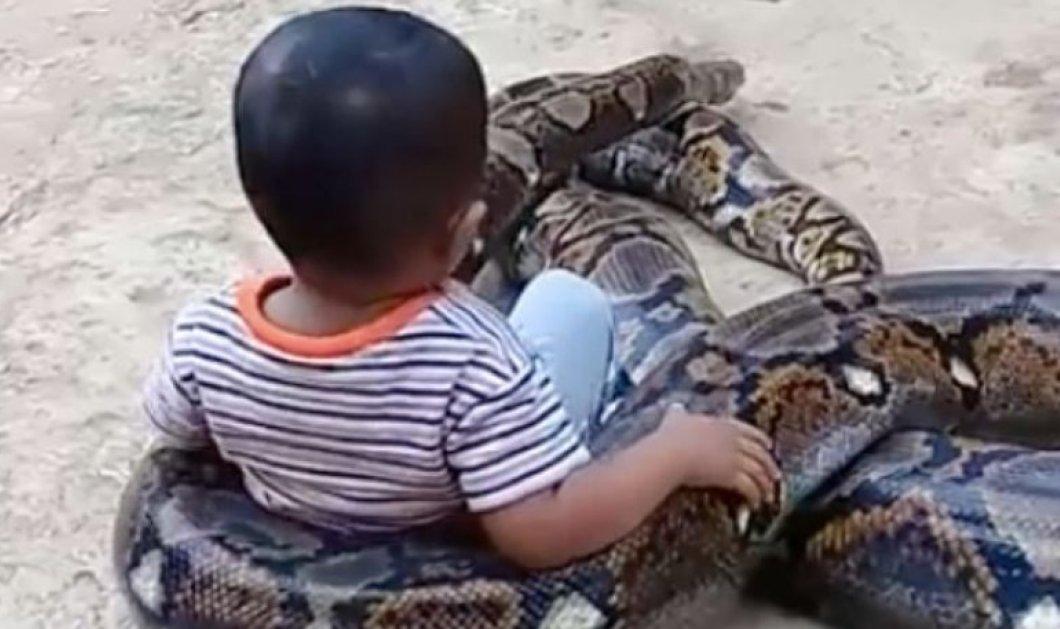 Βίντεο τρομακτικό η τρελό; Ο τριών ετών μικρούλης παίζει με πύθωνα 5 μέτρων νομίζοντας ότι είναι pet - Κυρίως Φωτογραφία - Gallery - Video