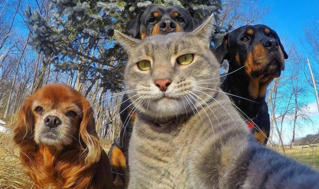20 μοναδικές λήψεις με ζώα που βγαίνουν καλύτερες Selfies από εσάς! Φώτο   - Κυρίως Φωτογραφία - Gallery - Video