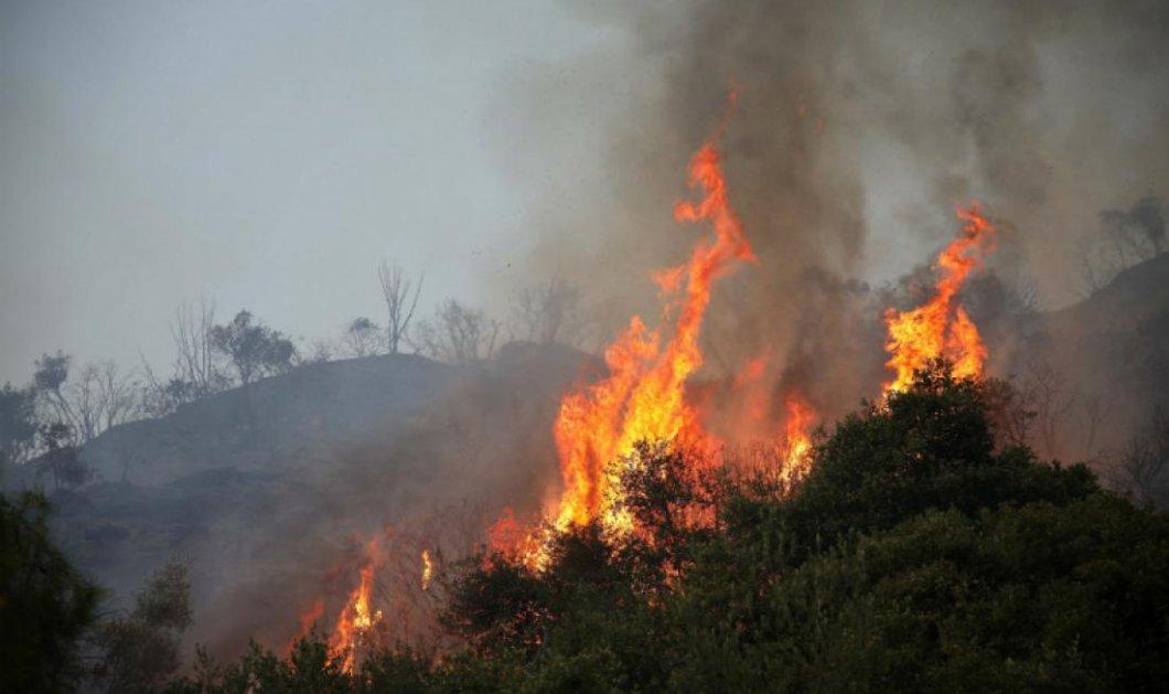 Χαλκιδική: Μεγάλη φωτιά μαίνεται ανεξέλεγκτη στη Σιθωνία - Απειλείται χωριό, εκκενώθηκαν σπίτια (Φωτό & Βίντεο) - Κυρίως Φωτογραφία - Gallery - Video