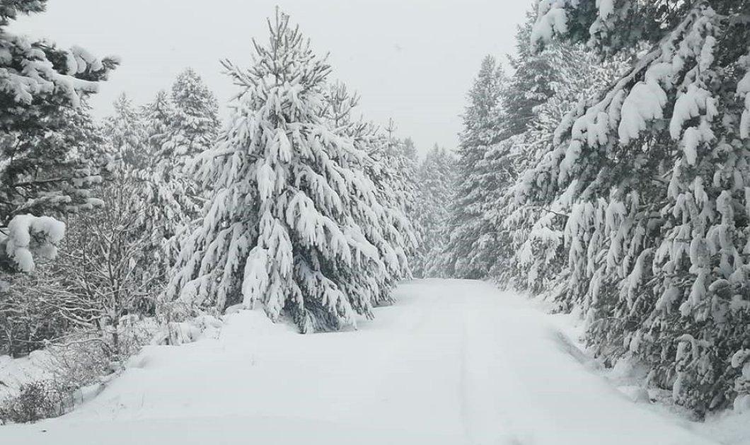 Λευκό τοπίο το Καταφύγι Βελβεντού - Kλειστά τα σχολειά σε Φλώρινα, Γρεβενά και Κοζάνη λόγω της χιονόπτωσης (Φωτό) - Κυρίως Φωτογραφία - Gallery - Video