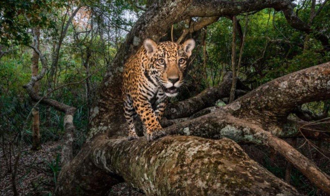 Οι καλύτερες φωτογραφίες του National Geographic για το 2017 - Κυρίως Φωτογραφία - Gallery - Video