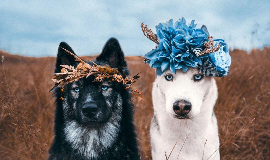 """Επικά πορτραίτα με σκύλους: Η φιλία των δύο Χάσκυ που θα σας """"λιώσει"""" την καρδιά - Φώτο    - Κυρίως Φωτογραφία - Gallery - Video"""