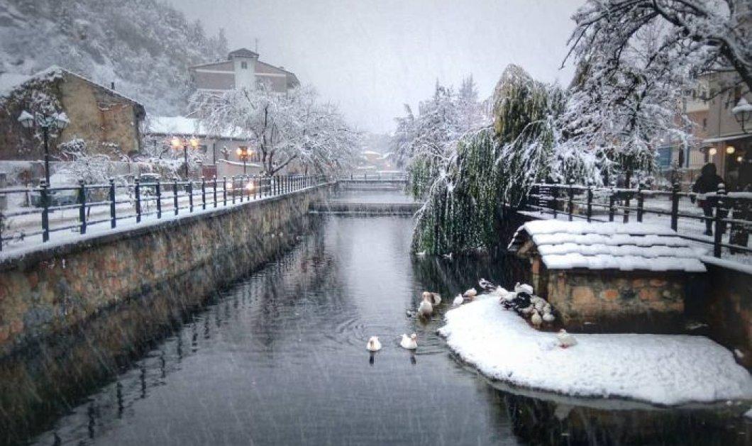 Eντυπωσιακά τοπία στην χιονισμένη Φλώρινα - Παγωμένος ποταμός με πάπιες και ποδήλατα παντού (φωτό) - Κυρίως Φωτογραφία - Gallery - Video