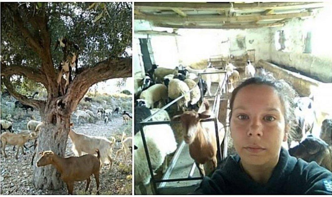Η 31χρονη Ιώ Πατριανάκου: Εκτρέφει 20 γίδια στην Αθήνα, φτιάχνει ωραία τυριά- Η γραφειοκρατία δεν την αφήνει να τα πουλήσει - Κυρίως Φωτογραφία - Gallery - Video
