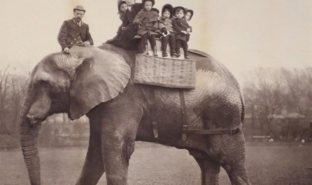 Η αληθινή ιστορία του πραγματικού Ντάμπο: Του κακοποιημένου, αλκοολικού ελέφαντα με το τραγικό τέλος - Κυρίως Φωτογραφία - Gallery - Video