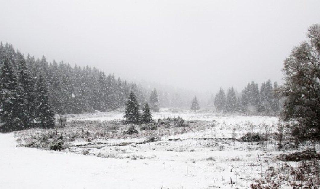 Τα πρώτα χιόνια στην Ελλάδα - Το έστρωσε στα Τρίκαλα (Φωτό) - Κυρίως Φωτογραφία - Gallery - Video