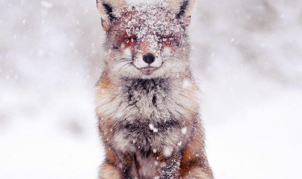 Φωτογράφος απαθανατίζει αλεπούδες να απολαμβάνουν το χιόνι - Είναι μαγικές!  - Κυρίως Φωτογραφία - Gallery - Video