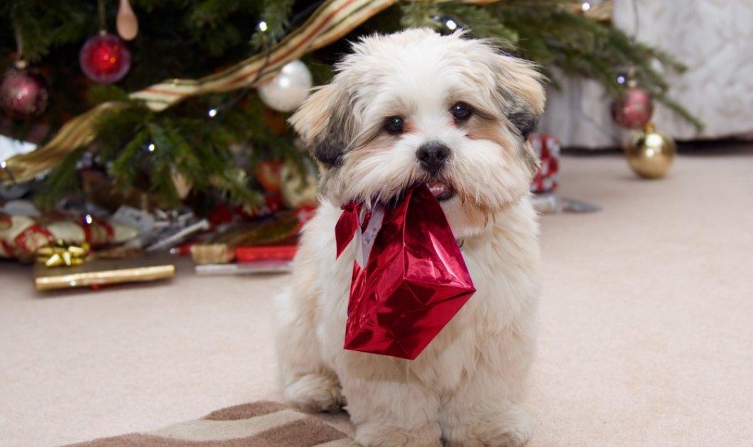 4+1 προτάσεις για μοναδικά Χριστουγεννιάτικα δώρα στα κατοικίδια σας!   - Κυρίως Φωτογραφία - Gallery - Video
