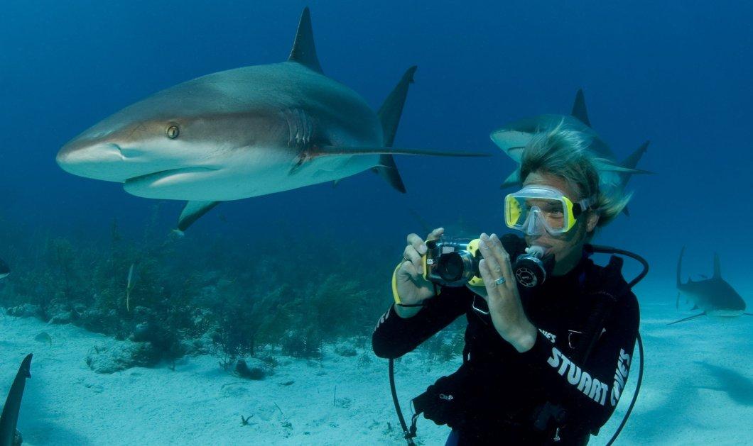 Τα σαγόνια του καρχαρία: Η τρομακτική στιγμή που δαγκώνει το πόδι δύτη καταγράφηκε σε βίντεο - Κυρίως Φωτογραφία - Gallery - Video