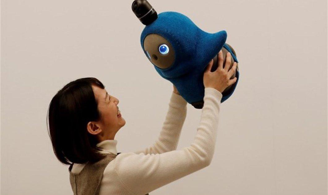 Lovot: Το ρομπότ των μοναχικών που θέλει προσοχή, αγάπη και τρυφερότητα - Κυρίως Φωτογραφία - Gallery - Video