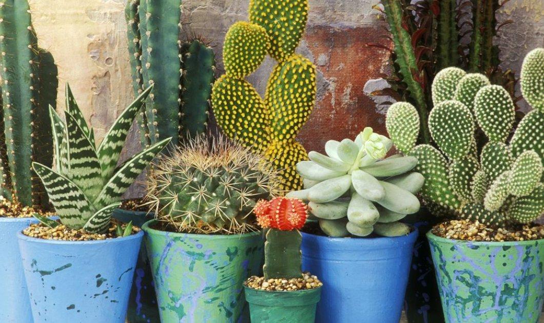 10 φυτά που δίνουν θετική ενέργεια στο σπίτι σας - Κυρίως Φωτογραφία - Gallery - Video