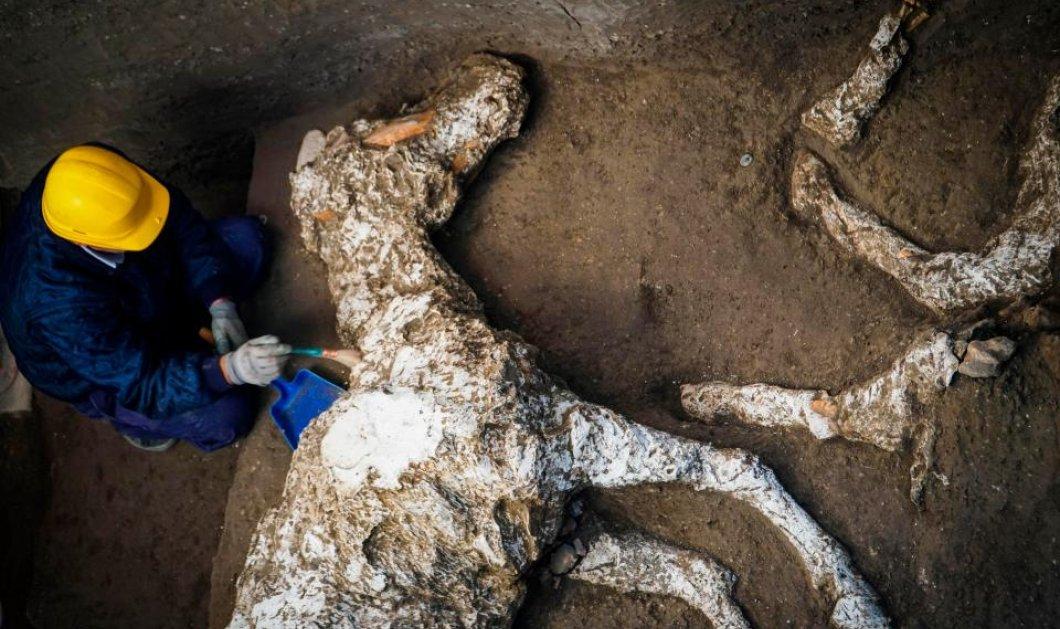 Ιστορική ανακάλυψη: Βρέθηκε απολιθωμένο άλογο 2.000 ετών, με χαλινάρια στα ερείπια βίλας στην Πομπηία -Φώτο    - Κυρίως Φωτογραφία - Gallery - Video