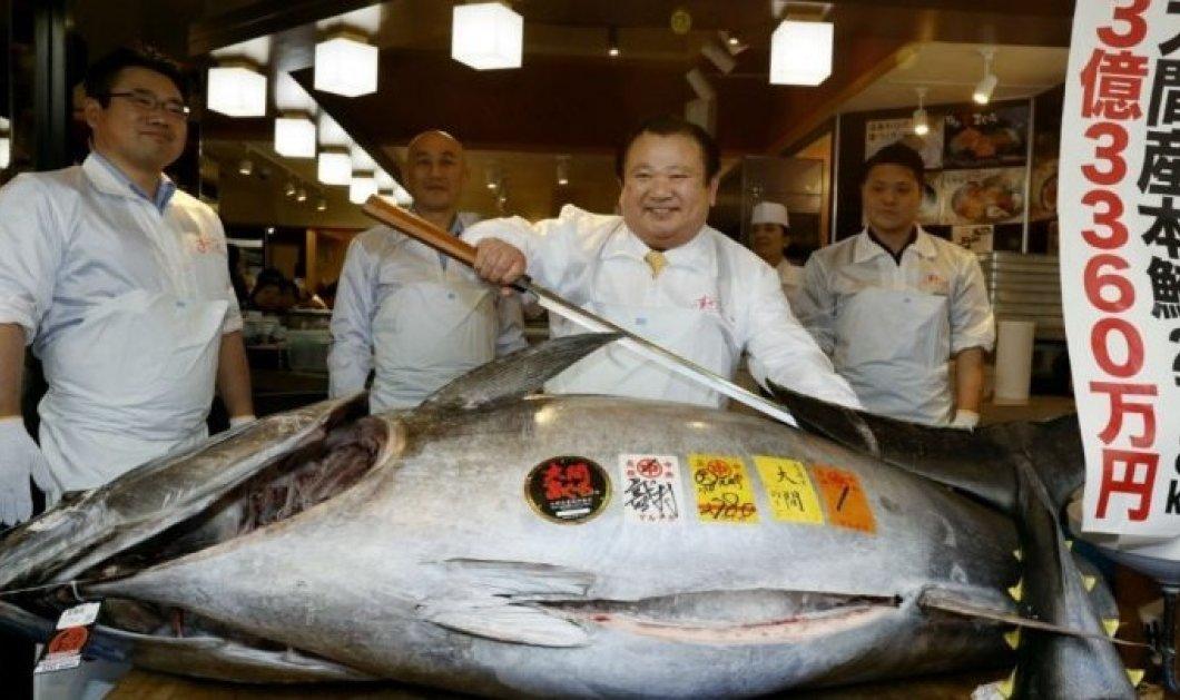 Τόνος πουλήθηκε σε τιμή ρεκόρ: 2,7 εκατ. ευρώ σε ιδιοκτήτη εστιατορίου σούσι στο Τόκιο  - Κυρίως Φωτογραφία - Gallery - Video