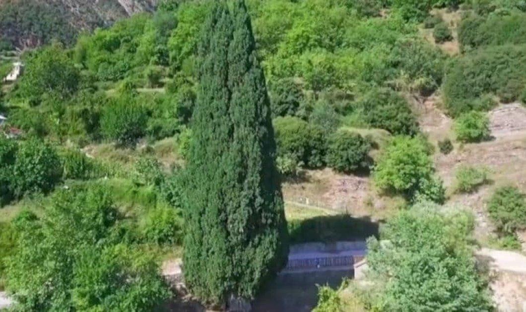 Κυπαρίσσι Ευρυτανίας: Το κεντρικό κυπαρίσσι του χωριού, η ιστορία & το απέραντο φυσικό κάλλος (Βίντεο) - Κυρίως Φωτογραφία - Gallery - Video
