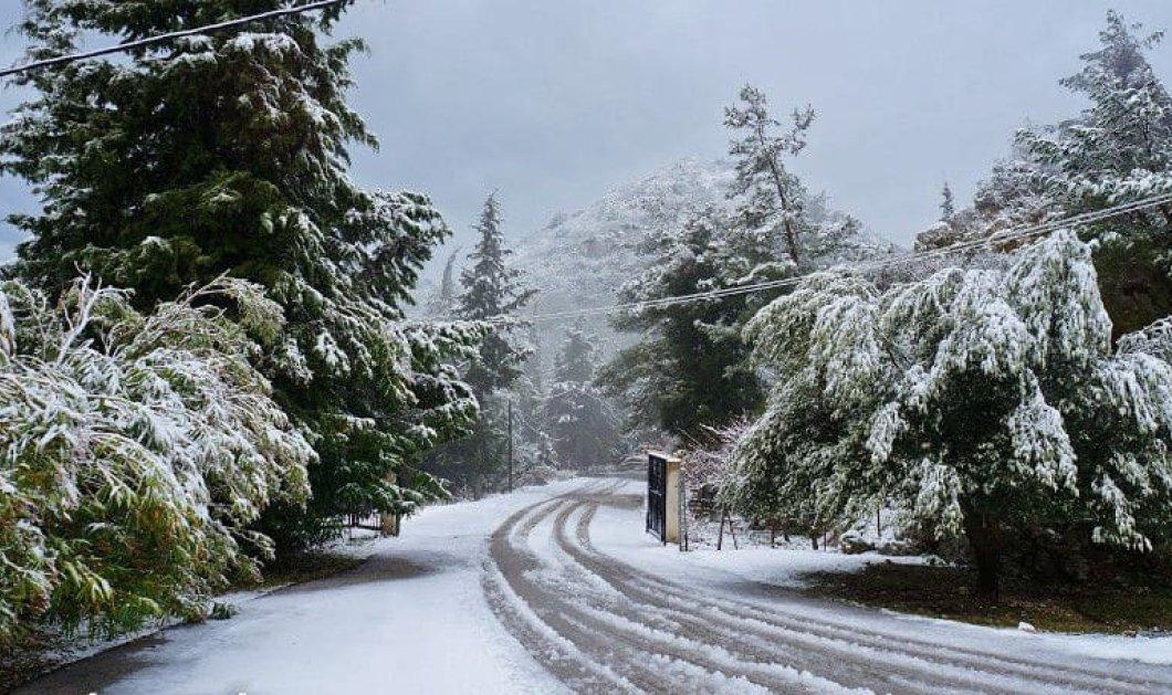 Παραμυθένια η Κρυοπηγή Πρέβεζας στα λευκά της – Απολαύστε το χιονισμένο τοπίο σε ένα μοναδικό βίντεο!  - Κυρίως Φωτογραφία - Gallery - Video