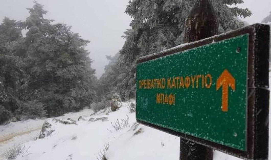 Μαγικές εικόνες από τη χιονισμένη Πάρνηθα – Στα λευκά ντύθηκε & το καταφύγιο Μπάφι - Βίντεο - Κυρίως Φωτογραφία - Gallery - Video