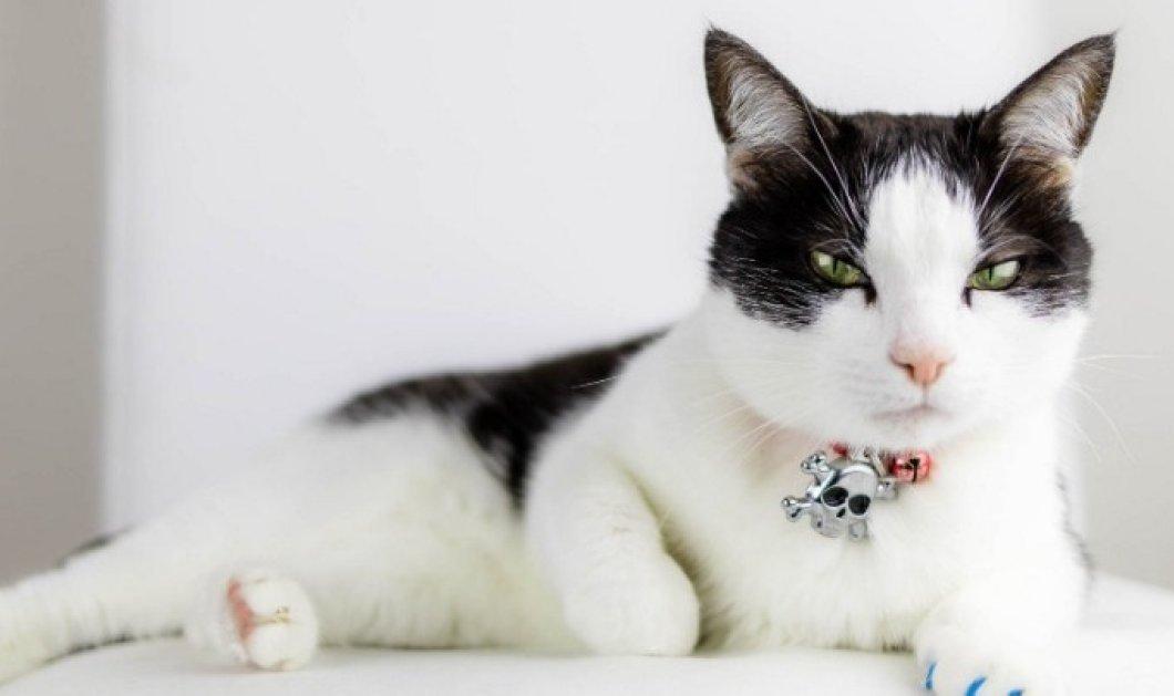 Απίστευτο: Άτακτη γάτα κατέστρεψε σπάνιο, πολύτιμο έργο τέχνης του 17ου αιώνα - Κυρίως Φωτογραφία - Gallery - Video