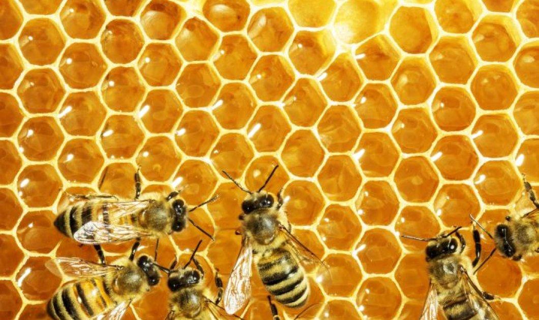 Ωραία είδηση! Οι μέλισσες ξέρουν να κάνουν πρόσθεση και αφαίρεση - Το λένε οι επιστήμονες!  - Κυρίως Φωτογραφία - Gallery - Video