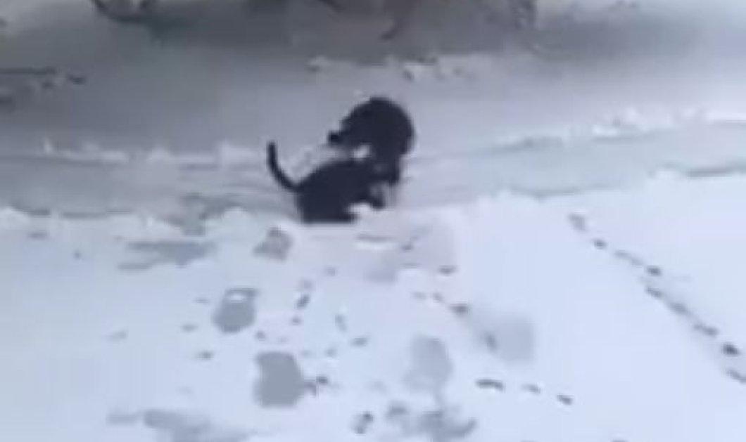 To βίντεο της ημέρας: Ο σκύλος σώζει την φίλη του την γάτα που ξεπαγιάζει στο χιόνι - Κυρίως Φωτογραφία - Gallery - Video