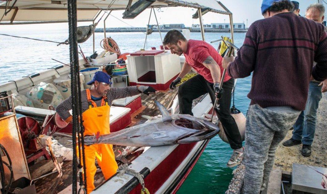 Νάξος: Πάνω από 300 κιλά ψάρια έφεραν με το αλιευτικό τους - Τόνοι τα περισσότερα βγήκαν με γερανό (φωτό & βίντεο) - Κυρίως Φωτογραφία - Gallery - Video
