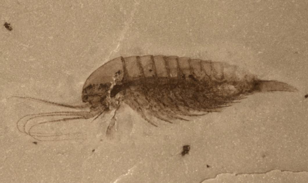 Επιστήμονες ανακάλυψαν στην Κίνα απολιθώματα των πρώτων ζώων της Γης (φωτο) - Κυρίως Φωτογραφία - Gallery - Video
