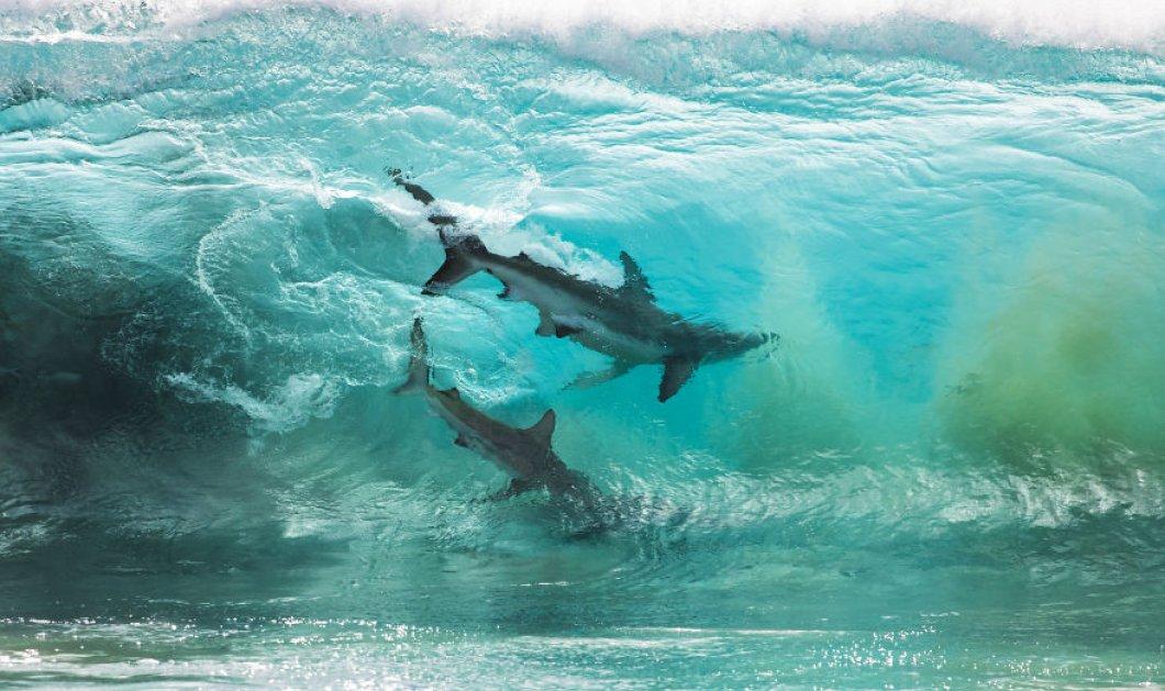 Αν δεν φοβάστε δείτε ελκυστικές εικόνες με καρχαρίες από την Δυτική Αυστραλία: Όλο το Μυστήριο του βυθού από τον φακό! - Κυρίως Φωτογραφία - Gallery - Video