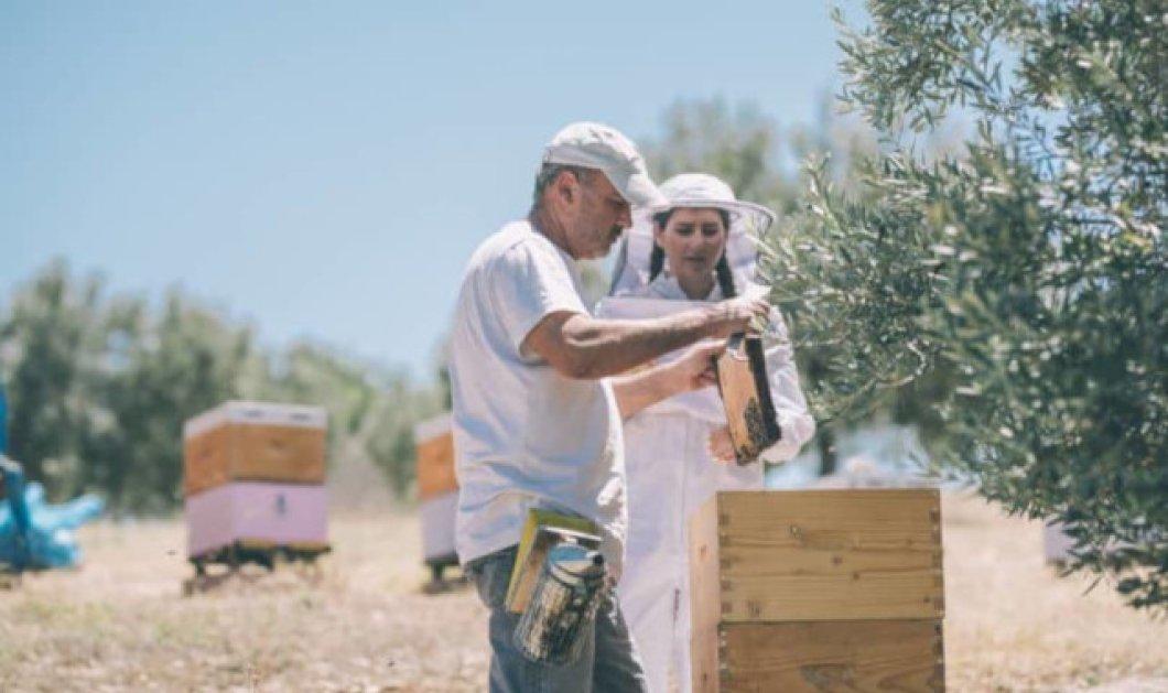 Made in Greece το άπιαστο μέλι Ermionis της Οικογένειας Μπαϊρακτάρη: Τέσσερις γενιές παράδοση, αλλά και ένα μουσείο μελιού - Κυρίως Φωτογραφία - Gallery - Video