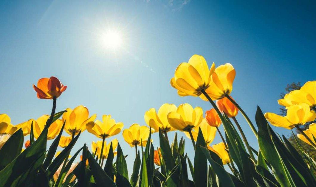 Ανοιξιάτικος ο καιρός σήμερα με άνοδο της θερμοκρασίας – Έρχονται αρκετά ζεστές ημέρες! - Κυρίως Φωτογραφία - Gallery - Video