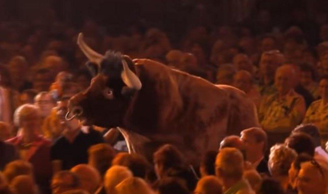 Βίντεο: Πάγωσαν οι θεατές της συναυλίας – Ταύρος μαινόμενος εναντίον κυρίας που φοράει κόκκινο φουστάνι - Κυρίως Φωτογραφία - Gallery - Video
