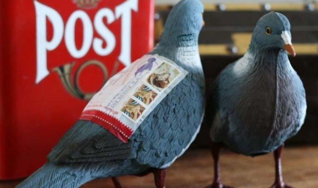 Ταχυδρομικό περιστέρι πουλήθηκε έναντι 1,25 εκατ. Ευρώ - Φανταστείτε τι απόρρητα μηνύματα μετέφερε!  - Κυρίως Φωτογραφία - Gallery - Video