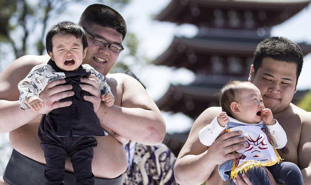 Παλαιστές Sumo κρατούν στην αγκαλιά τους μωράκια που κλαίνε - Φωτό από ετήσιο φεστιβάλ Nakizumo Crying - Κυρίως Φωτογραφία - Gallery - Video