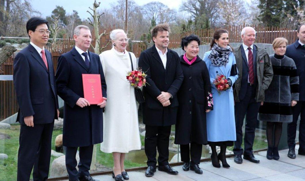 Δανία: Βασιλική υποδοχή για δύο πανέμορφα Panda - Η βασίλισσα Μαργαρίτα & η πριγκίπισσα Μαίρη εγκαινίασαν το νέο τους σπίτι (φώτο) - Κυρίως Φωτογραφία - Gallery - Video