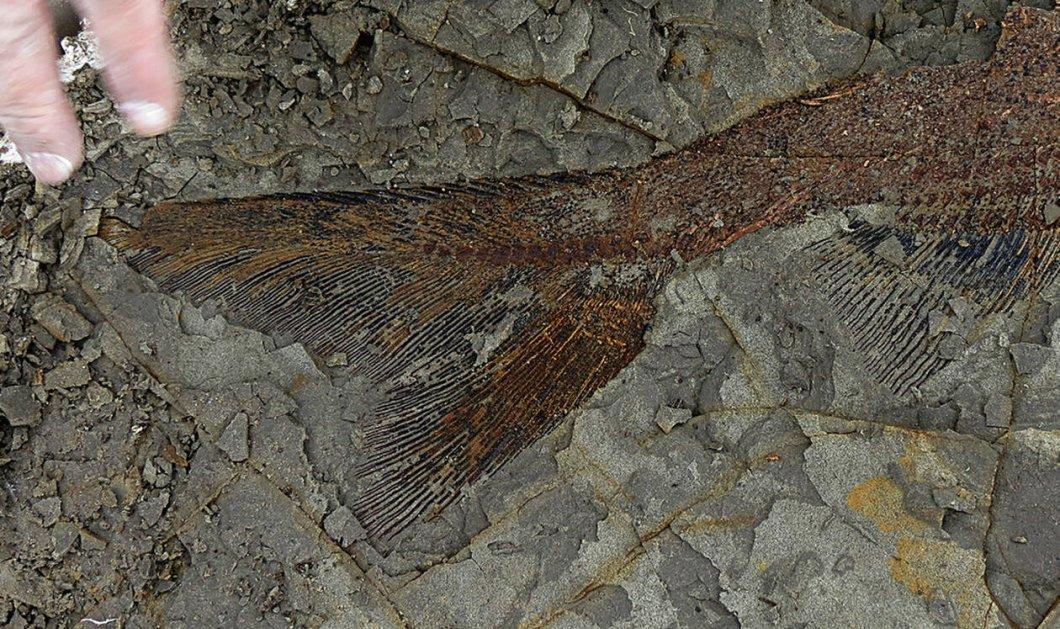 Σπουδαία ανακάλυψη: Βρέθηκαν τέλεια διατηρημένα απολιθώματα από τη μέρα της «Αποκάλυψης», πριν 66 εκατ. χρόνια - Φώτο  - Κυρίως Φωτογραφία - Gallery - Video