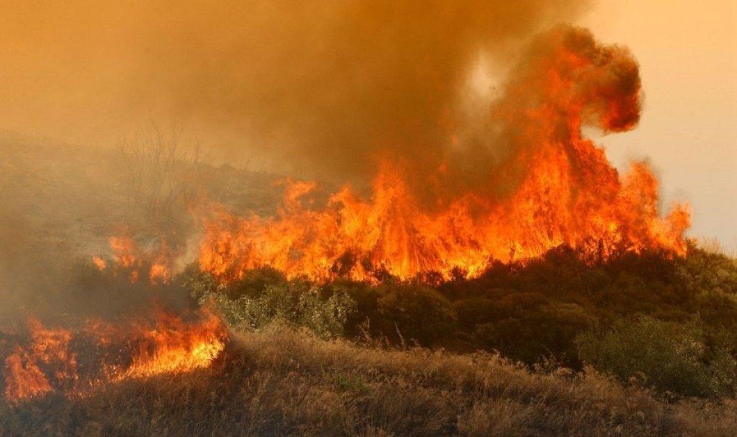 Μαίνεται η φωτιά στο δάσος της Στροφυλιάς – Καμμένα πάνω από 2.000 στρέμματα - Κυρίως Φωτογραφία - Gallery - Video
