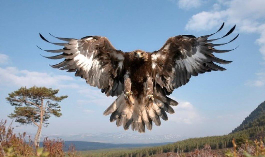 Θράκη: Σκότωσαν άγρια πτηνά με δόλωμα δηλητηριασμένο νεκρό άλογο - Κυρίως Φωτογραφία - Gallery - Video