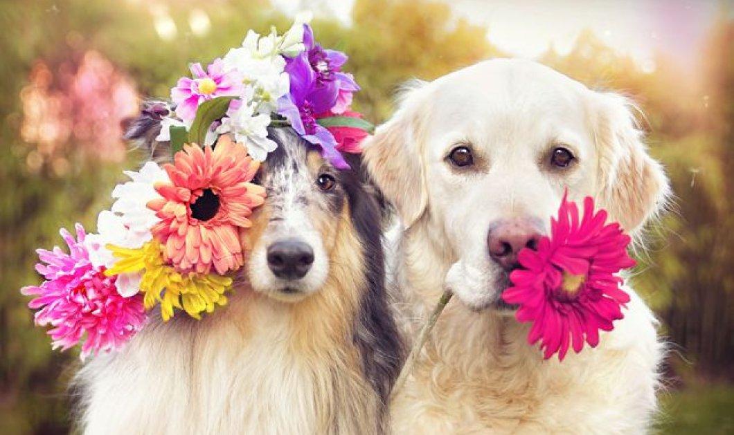 Πώς να αντιμετωπίσεις το άγχος αποχωρισμού για το σκύλο σου - Κυρίως Φωτογραφία - Gallery - Video