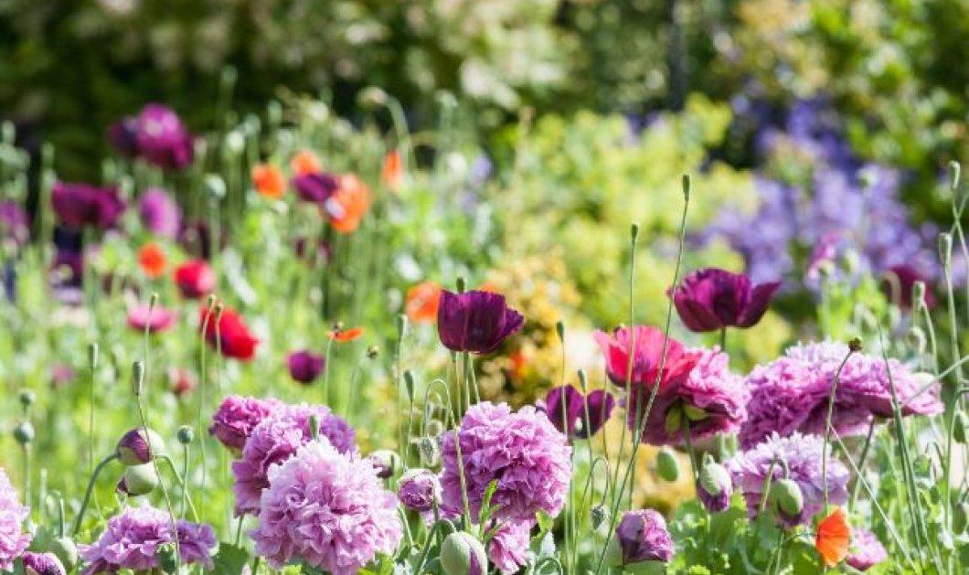 Πώς θα διακοσμήσεις το τραπέζι σου με λουλούδια σαν να είσαι στην εξοχή (φωτό) - Κυρίως Φωτογραφία - Gallery - Video