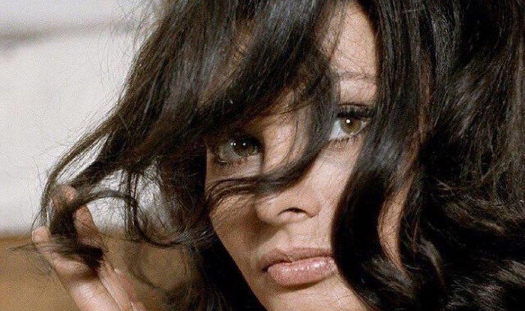Όταν οι καστανές είμαστε της μόδας- Αχ Σοφία Λόρεν μου να μας το θυμίζεις με θεϊκές vintage φωτό - Κυρίως Φωτογραφία - Gallery - Video