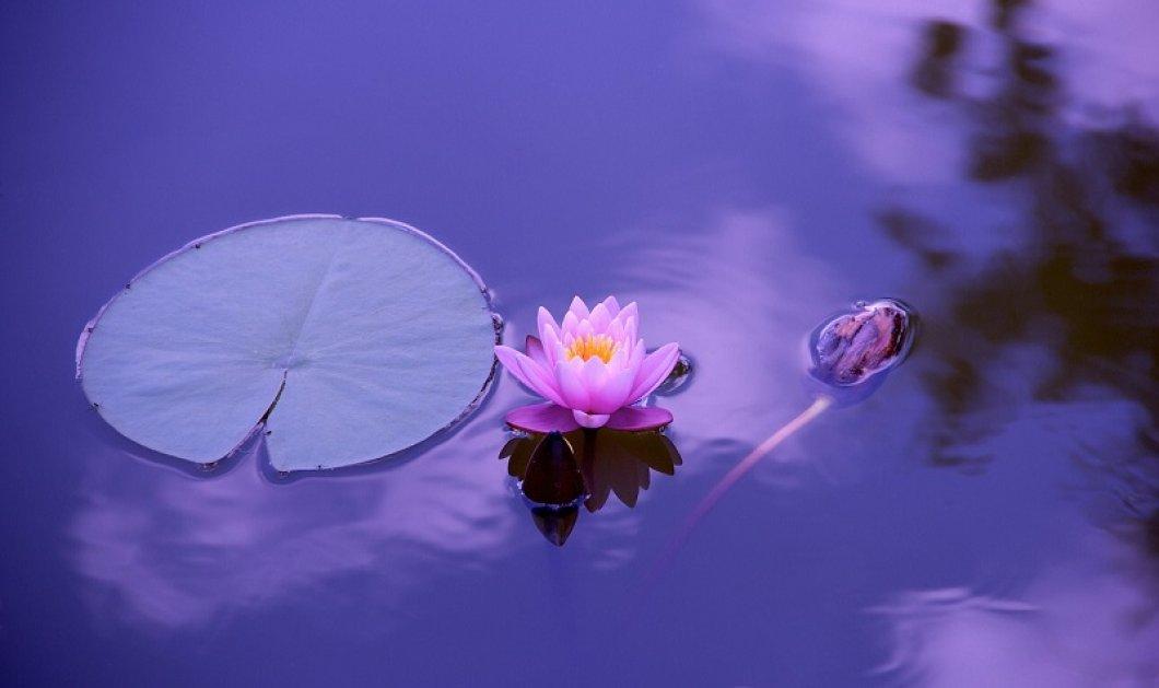Φέρνουμε (για τα καλά) την Άνοιξη στα σπίτια σας με τα ωραιότερα λουλούδια - Από ντάλιες έως κυκλάμινα κι από βιολέτες μέχρι άνθη λεμονιάς (φωτό) - Κυρίως Φωτογραφία - Gallery - Video