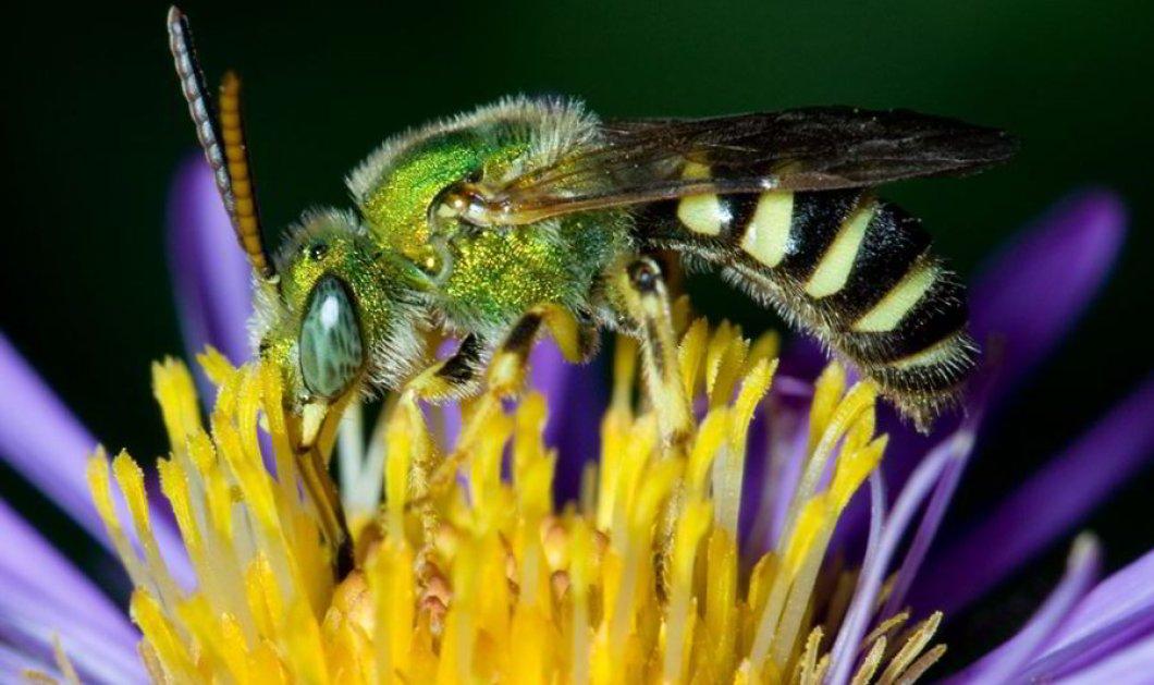 """Είχε αφόρητους πόνους! Βρήκαν λοιπόν 4 μέλισσες στο μάτι 28χρονης - """"Έτρωγαν"""" τα δάκρυα της (φώτο- βίντεο)  - Κυρίως Φωτογραφία - Gallery - Video"""