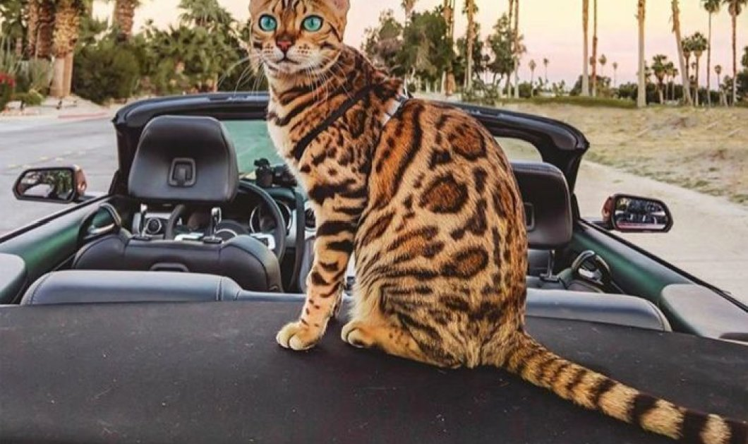 «Adventure Cats»: Οι γάτες που έγιναν... travel bloggers! Πόσα εκατ. ακολούθους έχουν στο Instagram;  - Κυρίως Φωτογραφία - Gallery - Video