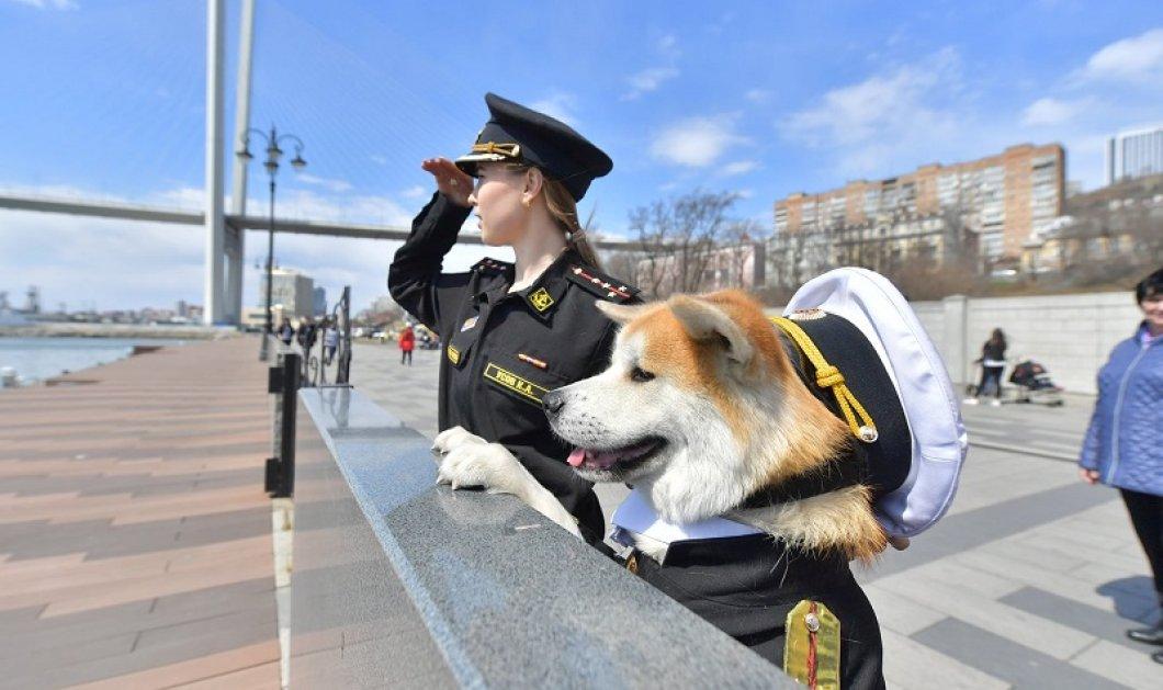Απίθανη φωτό: Πανέμορφη Ρωσίδα αξιωματικός του Πολεμικού Ναυτικού με το Ακίτα σκυλάκι της και τις... στολές τους! - Κυρίως Φωτογραφία - Gallery - Video