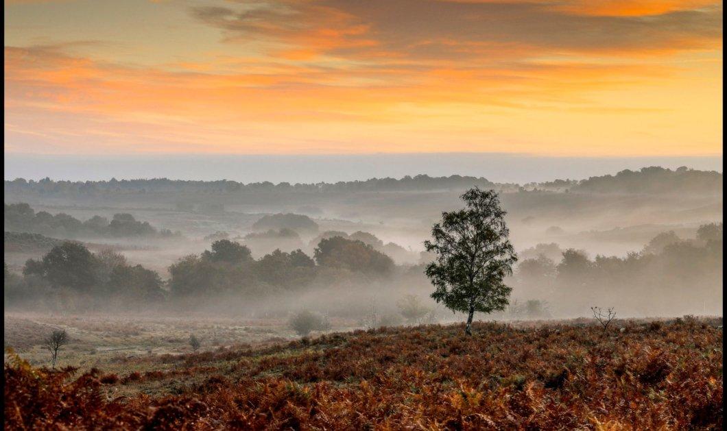Μαγευτικό τοπίο: Η ομίχλη υποχωρεί σιγά-σιγά καθώς ξημερώνει στο New Forest της Μεγάλης Βρετανίας (φωτό) - Κυρίως Φωτογραφία - Gallery - Video