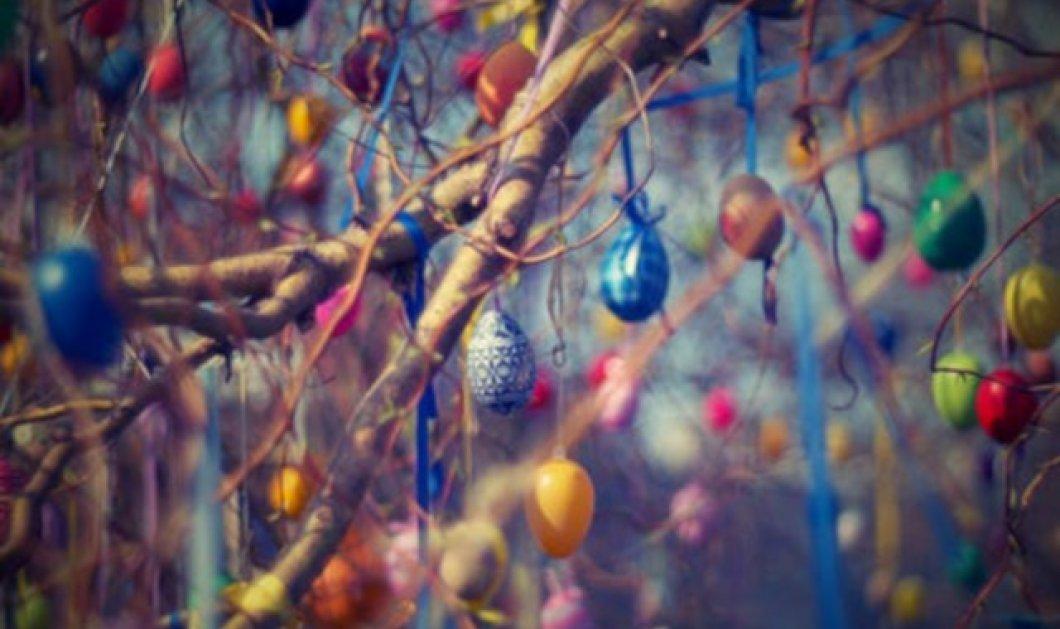 Οι Γερμανοί το Πάσχα στολίζουν δέντρο με αυγά – Το έθιμο των 124 ετών  (φωτο) - Κυρίως Φωτογραφία - Gallery - Video