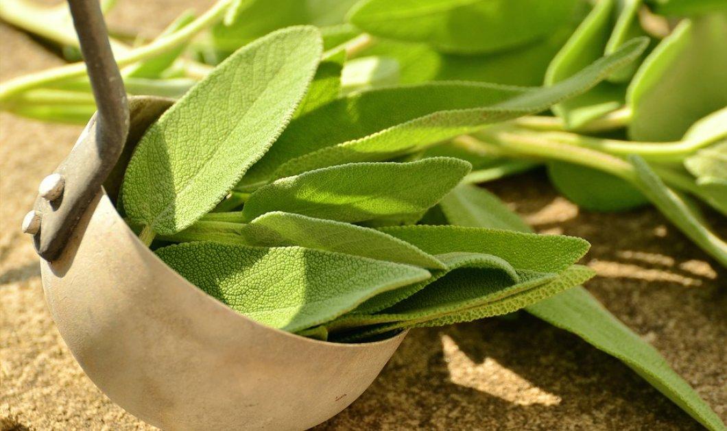 Φασκόμηλο: Το «Ελληνικό τσάι» με πλούσια διατροφική αξία &  ιδανικό συστατικό για αρκετά προϊόντα ομορφιάς - Κυρίως Φωτογραφία - Gallery - Video