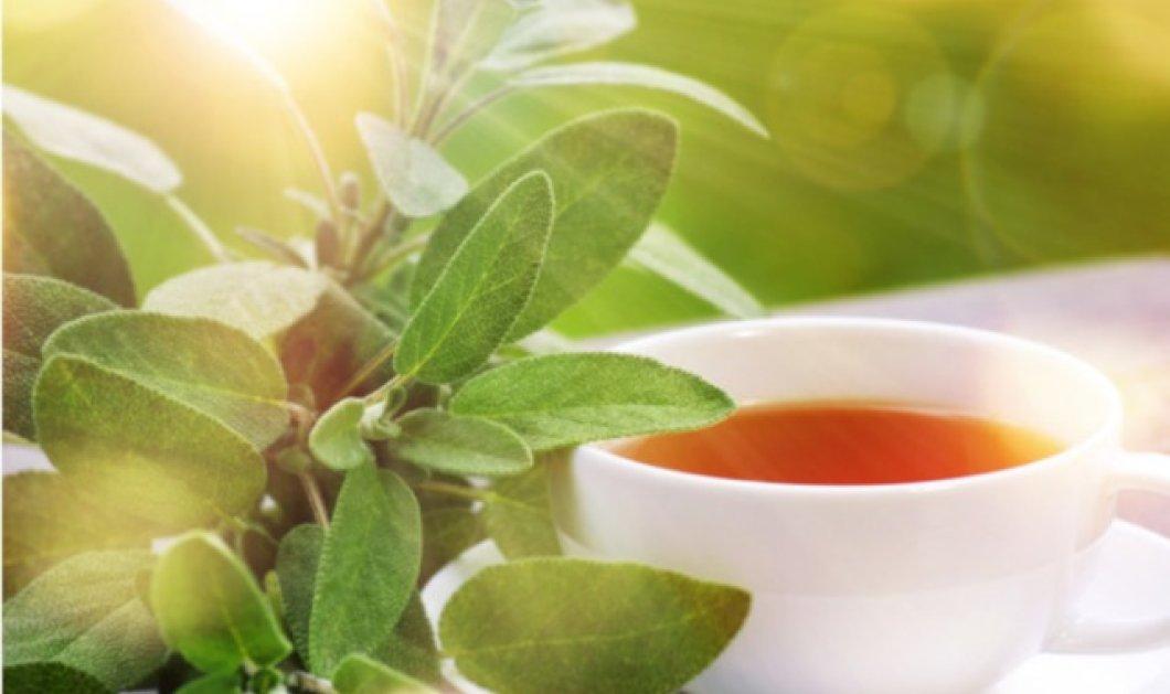 Φασκόμηλο: Το «Ελληνικό τσάι» με τα πλούσια οφέλη στην σωστή δόση, σαν κάνναβις σε υπερβολική  - Κυρίως Φωτογραφία - Gallery - Video