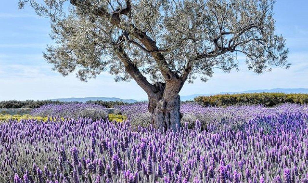 Ίσως το πιο όμορφο ανοιξιάτικο φυσικό τοπίο στην Πελοπόννησο που έχουμε δει - Απίθανη η φωτογραφία της ημέρας! - Κυρίως Φωτογραφία - Gallery - Video