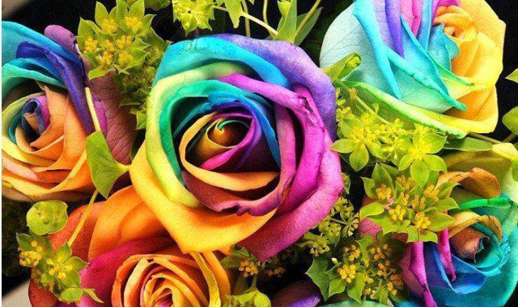 Η Ευρωπαϊκή Επιτροπή γιορτάζει τη Διεθνή Ημέρα κατά της ομοφοβίας, της τρανσφοβίας και της αμφιφοβίας - Κυρίως Φωτογραφία - Gallery - Video